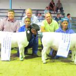 Dorperland Regional Championship Upington 2015 Reserve Junior Champion Dorper Ram