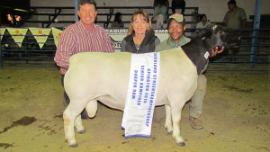 Dorperland Regional Championship Upington 2015 Senior Champion Dorper Ram