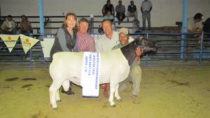 Dorperland Regional Championship Upington 2015 Champion Dorper Ram